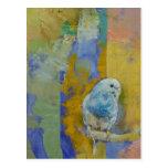 Feng Shui Parakeets Postcards