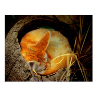 Fennec Fox Post Card