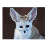 Fennec fox post cards