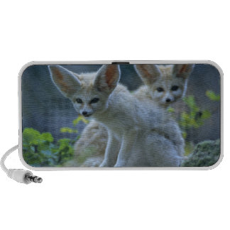 Fennec Foxes Mp3 Speakers