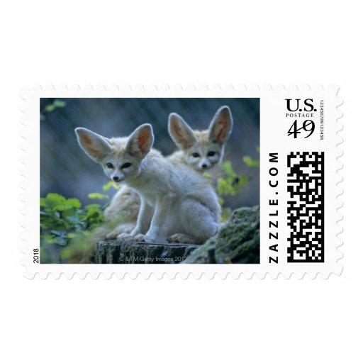 Fennek (Vulpes zerda) W�_stenfuchs, Fennec Postage Stamp