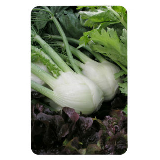 Fennel and lettuce magnet