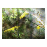 Fennel Cards