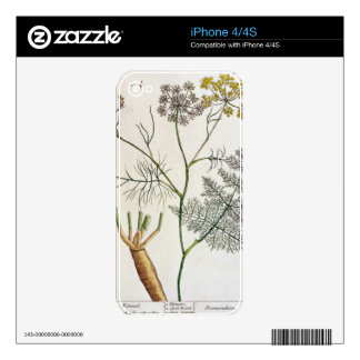 Fennel, plate 288 from 'A Curious Herbal', publish Decals For The iPhone 4
