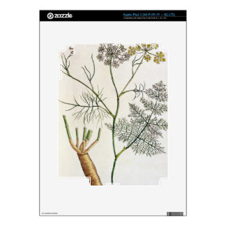 Fennel, plate 288 from 'A Curious Herbal', publish iPad 3 Decal