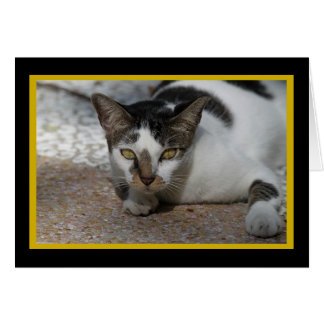 Feral Beauty Animal Notecards Card