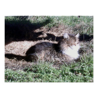 Feral Cat in Sunlight poster