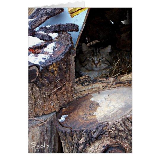 Feral Cat in Winter Note Card