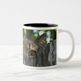 Feral cat Isis mug
