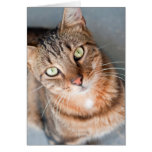 Feral cat looking up - CARD