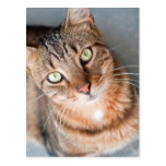 Feral cat looking up - POSTCARD