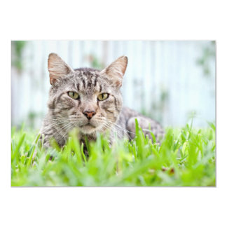 Feral cat on the lawn card
