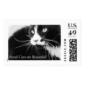 Feral cat postage stamp