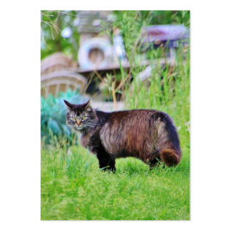 Feral Cat Walking in the Grass Large Business Cards (Pack Of 100)