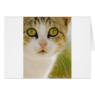 Feral Cat with Eyeliner Card