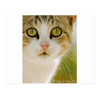 Feral Cat with Eyeliner Postcard