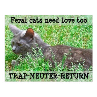 Feral Cats Need Love - TNR Postcard