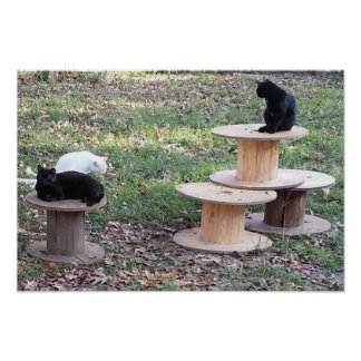 Feral Cats on Wooden Spools Posters