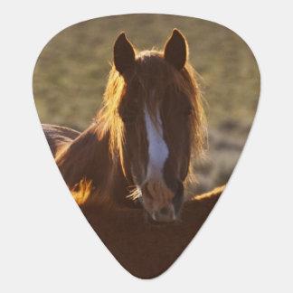 Feral Horse Equus caballus) adult and colt in Guitar Pick
