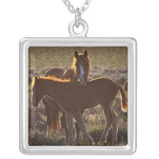 Feral Horse Equus caballus adult and colt in Pendant