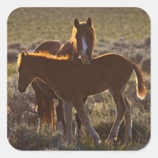 Feral Horse Equus caballus) adult and colt in Square Sticker