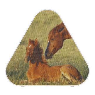 Feral Horse Equus caballus) adult smelling Bluetooth Speaker
