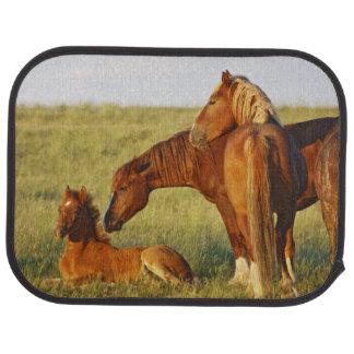 Feral Horse Equus caballus) adult smelling Car Mat