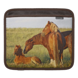 Feral Horse Equus caballus) adult smelling iPad Sleeves