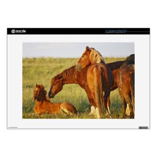 Feral Horse Equus caballus) adult smelling Laptop Decals