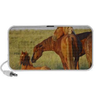 Feral Horse Equus caballus) adult smelling Mini Speaker