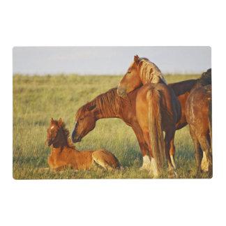 Feral Horse Equus caballus) adult smelling Placemat
