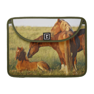 Feral Horse Equus caballus) adult smelling Sleeves For MacBook Pro