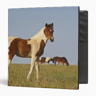 Feral Horse Equus caballus) colt with herd in 3 Ring Binder