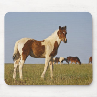 Feral Horse Equus caballus) colt with herd in Mouse Pad