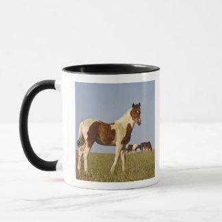 Feral Horse Equus caballus) colt with herd in Mug
