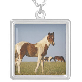 Feral Horse Equus caballus colt with herd in Jewelry