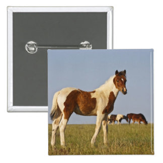 Feral Horse Equus caballus) colt with herd in Pinback Button