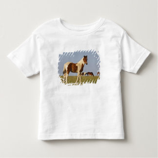 Feral Horse Equus caballus) colt with herd in Toddler T-shirt