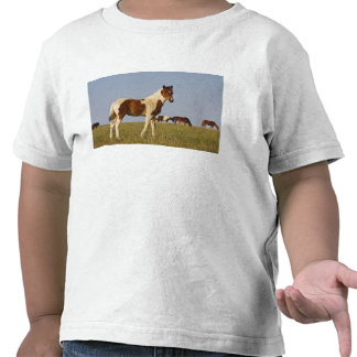 Feral Horse Equus caballus) colt with herd in Tshirts
