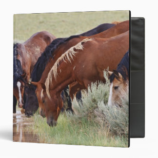 Feral Horse Equus caballus) herd drinking in 3 Ring Binders