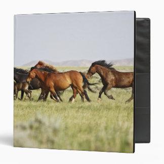 Feral Horse Equus caballus) herd of wild 3 Ring Binders