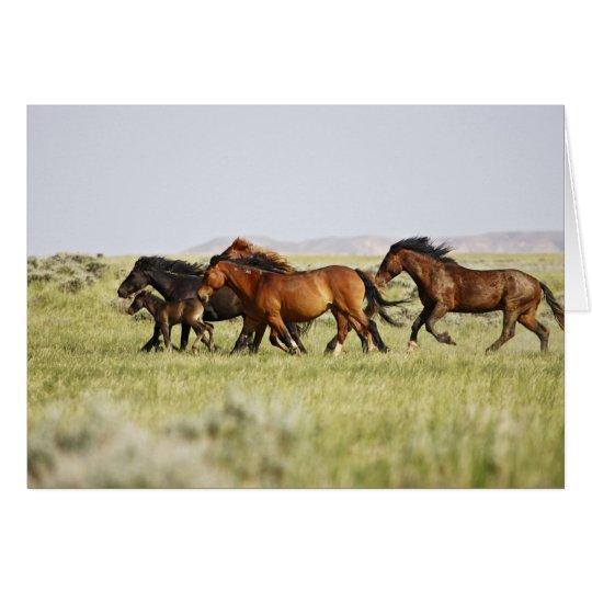 Feral Horse Equus caballus) herd of wild Card