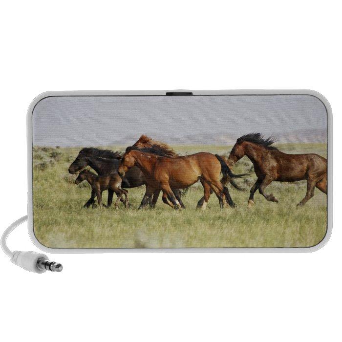 Feral Horse Equus caballus) herd of wild Mini Speaker