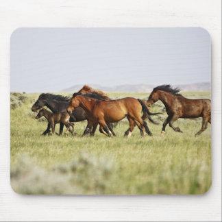 Feral Horse Equus caballus) herd of wild Mouse Pad