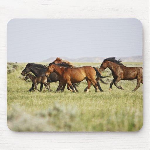 Feral Horse Equus caballus) herd of wild Mousepad
