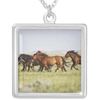 Feral Horse Equus caballus herd of wild Jewelry