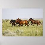 Feral Horse Equus caballus) herd of wild Print