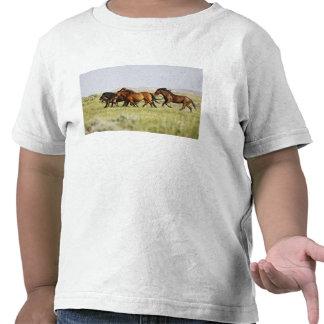 Feral Horse Equus caballus) herd of wild Tshirts