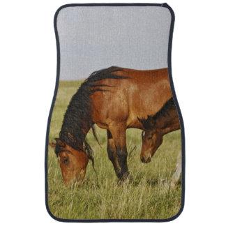 Feral Horse Equus caballus) wild horse mother Car Mat