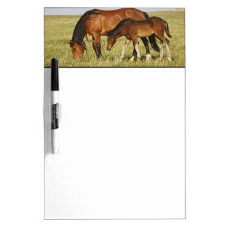 Feral Horse Equus caballus) wild horse mother Dry-Erase Board